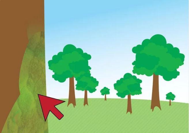 خزه درخت