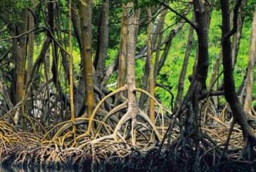 جنگل حرا قشم