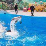 پارک دلفین ها جزیره کیش
