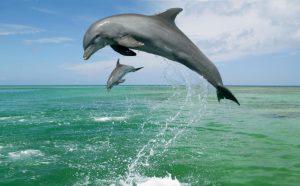 دلفینهای قشم